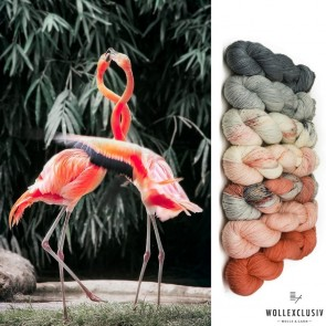 WOLLEXCLUSIV COLOR KIT ∣ FLAMINGO LOVERS