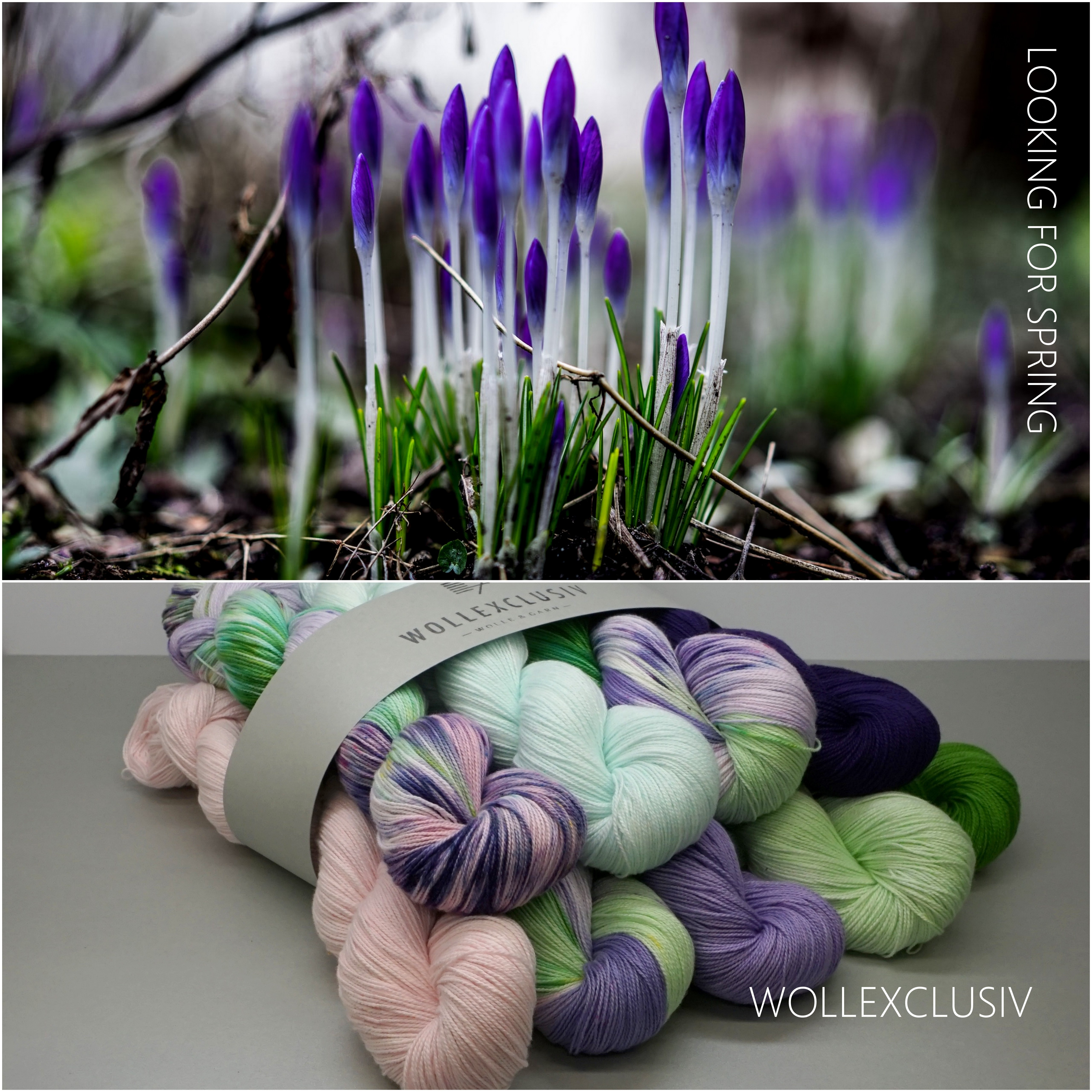 XXL - KIT COTTON LACE ∣ LOOKING FOR SPRING